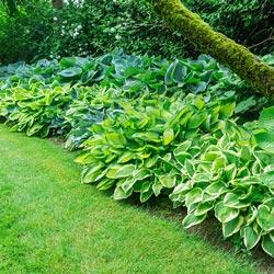 Pail Of Perennials