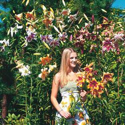 Lily Tree<sup>®</sup> Mix