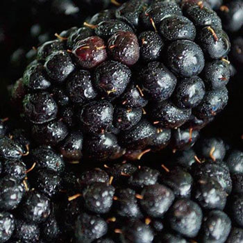 Black Magic Blackberry