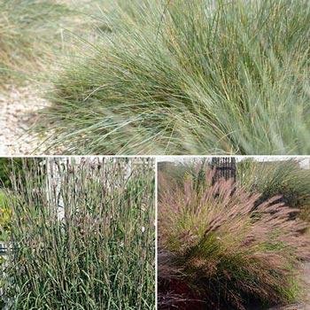 Three Season Grass Collection