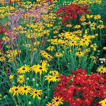 Modern Prairie Garden