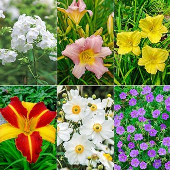 Three Season Daylilies and Friends  Garden