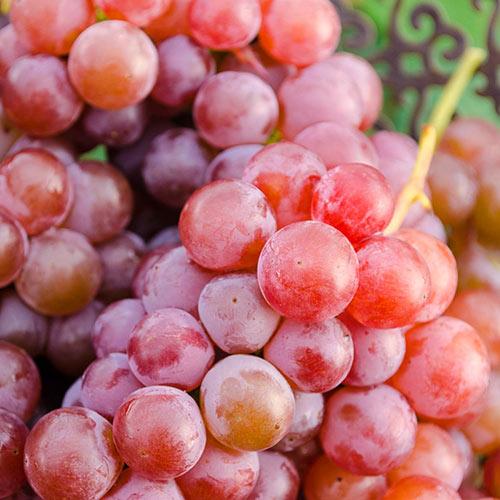 Tickled Pink™ Grape