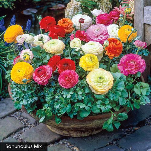 Amsterdam Flower Market Grab Bag