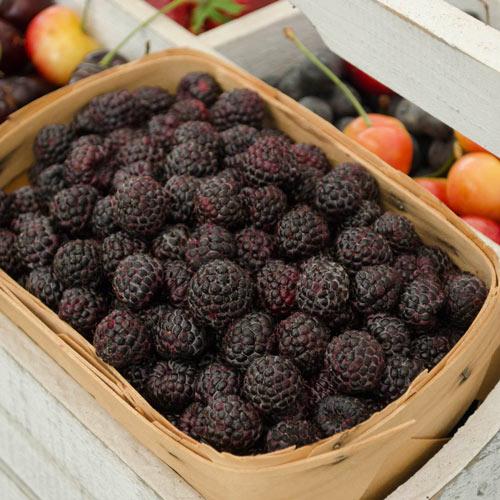 Raspberry Munger