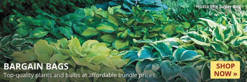 Bargain Bags