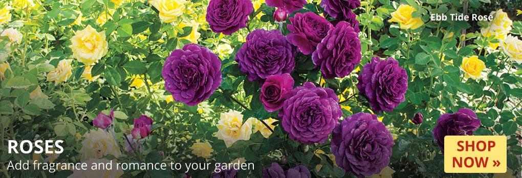 Garden_Plans