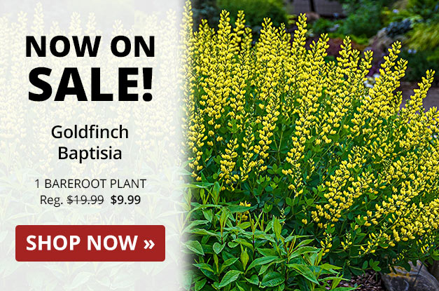 Michigan Bulb Special Offer