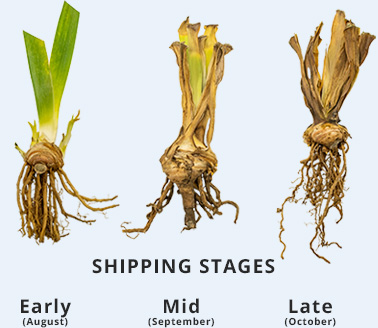 Shipping Stages