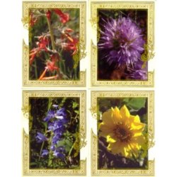 Monastery Flower Note Cards from St. Benedict's