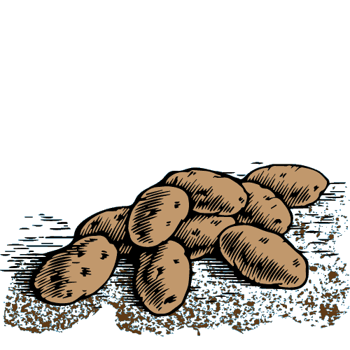 potato drawing with dirt
