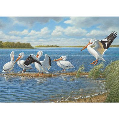 Pelicans 1000 Piece Jigsaw Puzzle