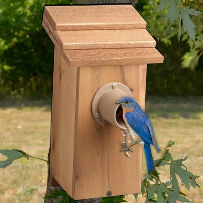Bird Houses and Shelters