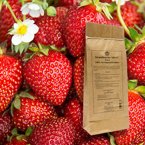 Strawberries Alive!™ 1lb.