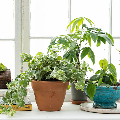 Houseplants Alive!<sup>®</sup>