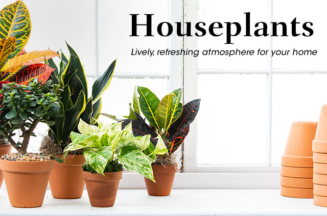 Spring Hill Nurseries | Find your Inspiration