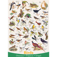Birds of Field and Garden 1000 Piece Jigsaw Puzzle