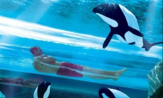 SeaWorld  - Ticket 1 dia