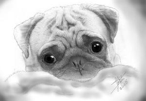 Crearé un tierno retrato de tu mascota con mi estilo