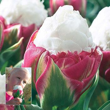 Brecks Ice Cream Tulip