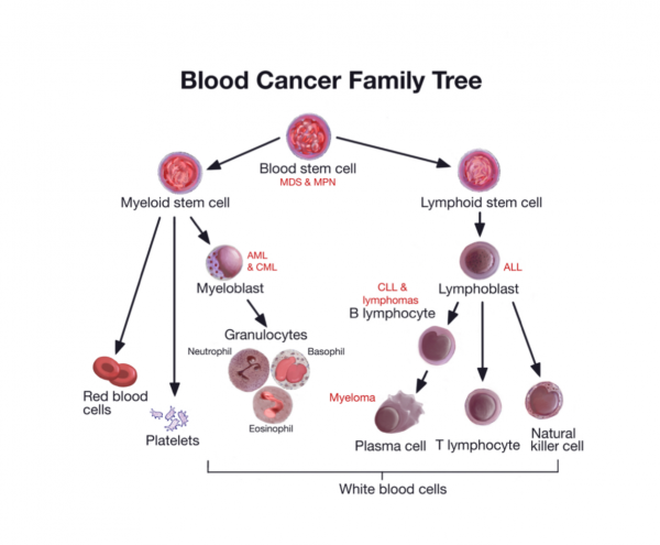 Blood Cancer Family Tree
