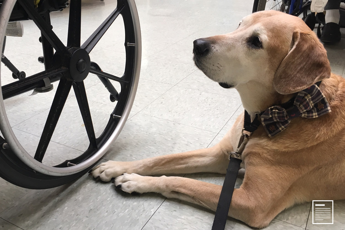 Can Dogs Detect Prostate Cancer?