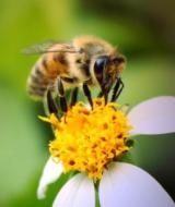 Bees picture