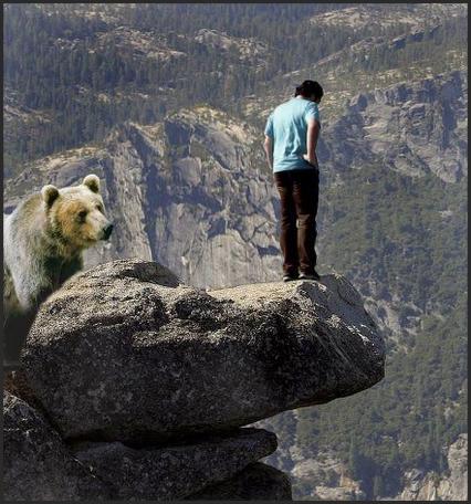 bears push bulls off cliff