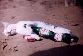 drunk dead cat