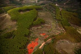 Reforested mine in Minas Gerais