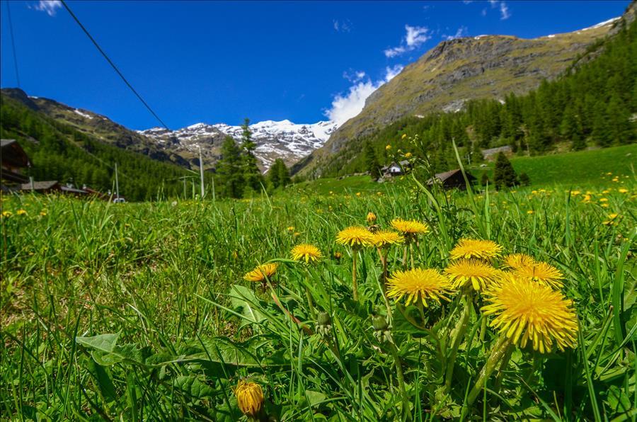 Ferienwohnung 1bdr with views of the Alps (1917508), Gressoney la Trinite', , Aostatal, Italien, Bild 17