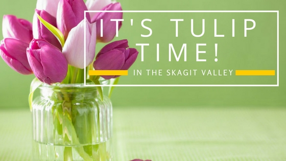 skagit tulip festival, seattle vacation rentals, Sarah Vallieu,