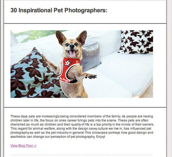 30 pet photographers