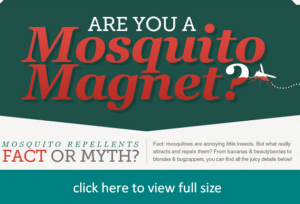 mosquito magnet infographic