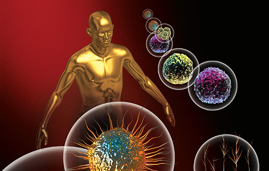 3d rendered depiction of Stem Cells and a human figure.