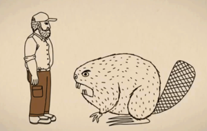 Duluth Beaver