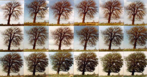 tree-year