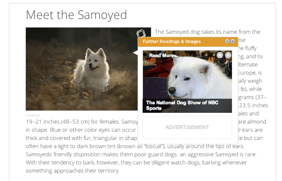 meet the samoyed
