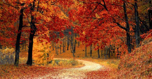 Fall Change