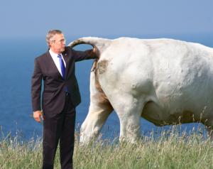 Cow Ass