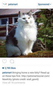 Petsmart Instagram Ad