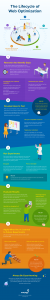 Crazy Egg Infographic: The Lifecycle of Website Optimization