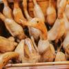teak ducks 2