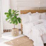 water-hyacinth-bed-2