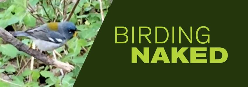 Birding Naked _Banner _969x 341