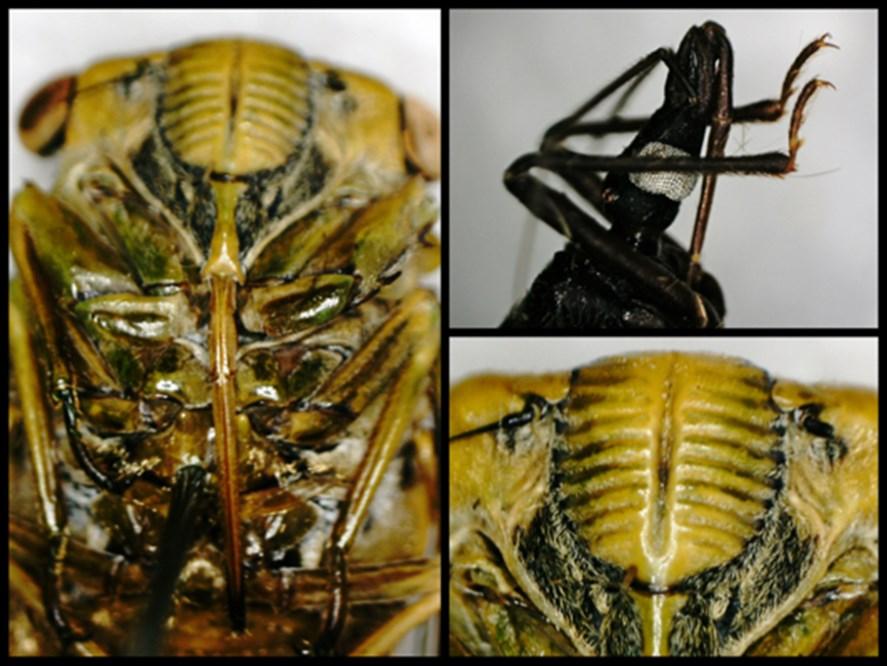 Lepidoptera Proboscis Celestron