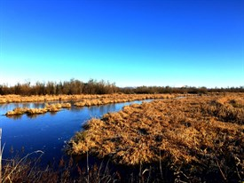 Scappoose Bottoms