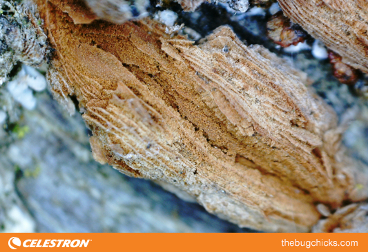 Tree Bark Celestron