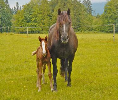Mb2416 1 horses