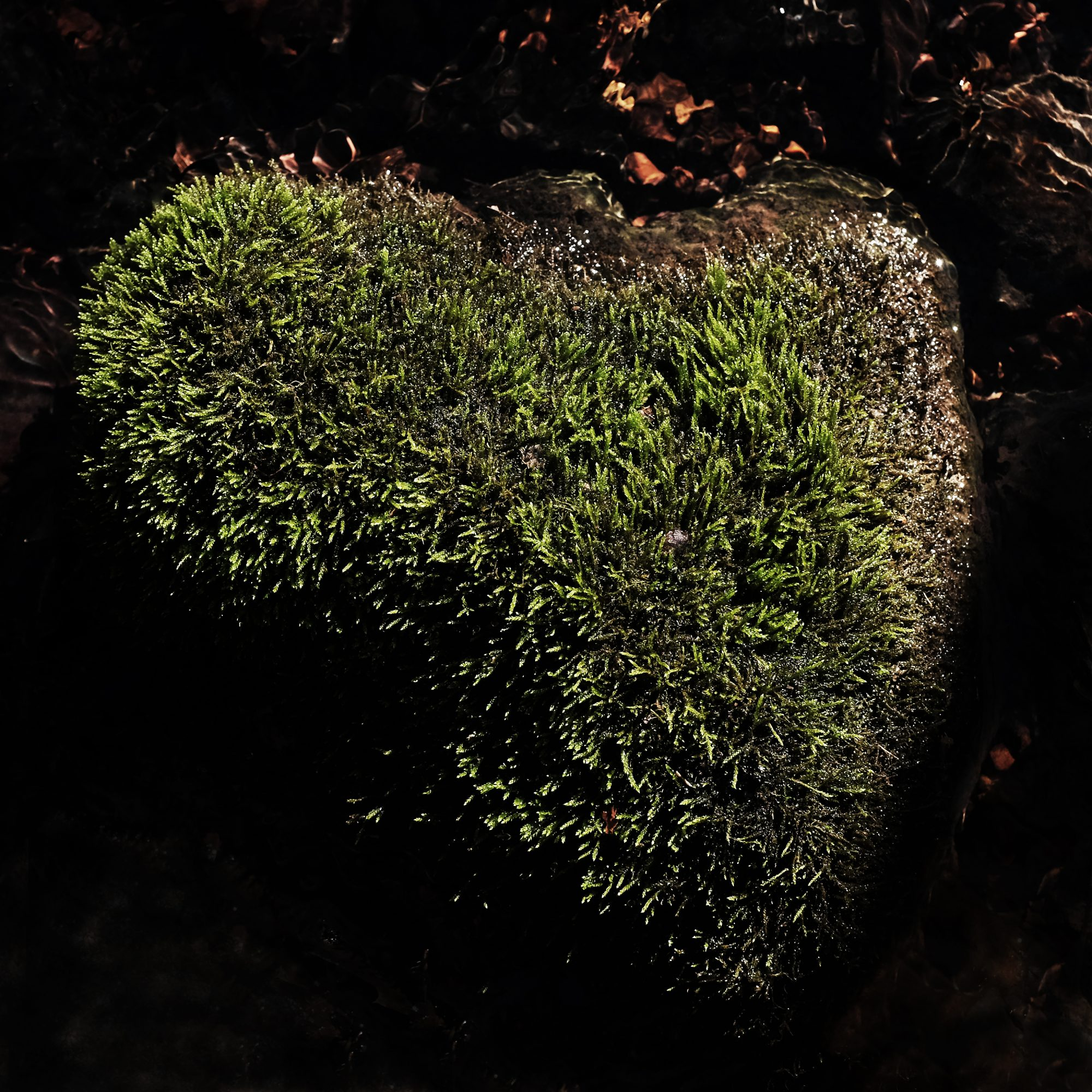 Mossy Heart - Giving Back in Middle Tennessee